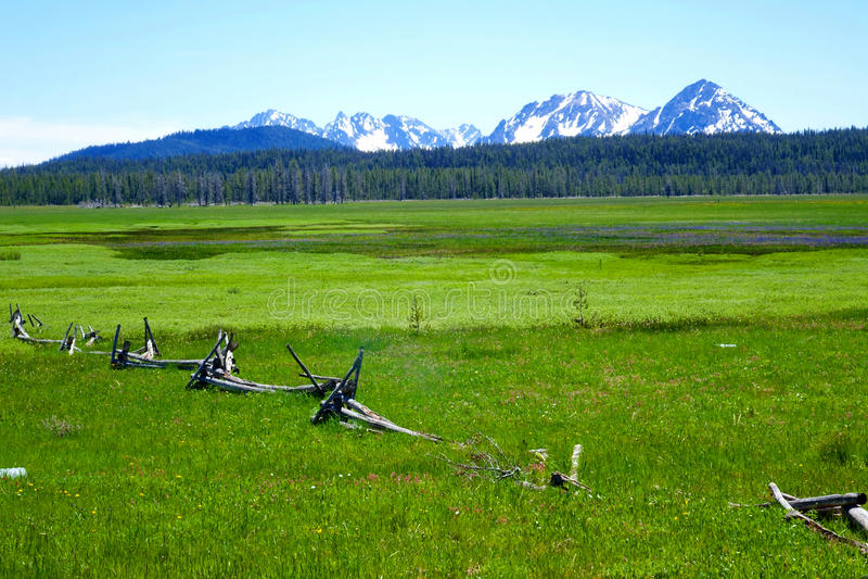 Äng för högt berg - Idaho royaltyfri bild