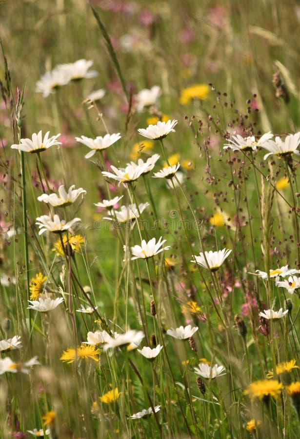Äng för lös blomma i sommar Fältbukett arkivfoto