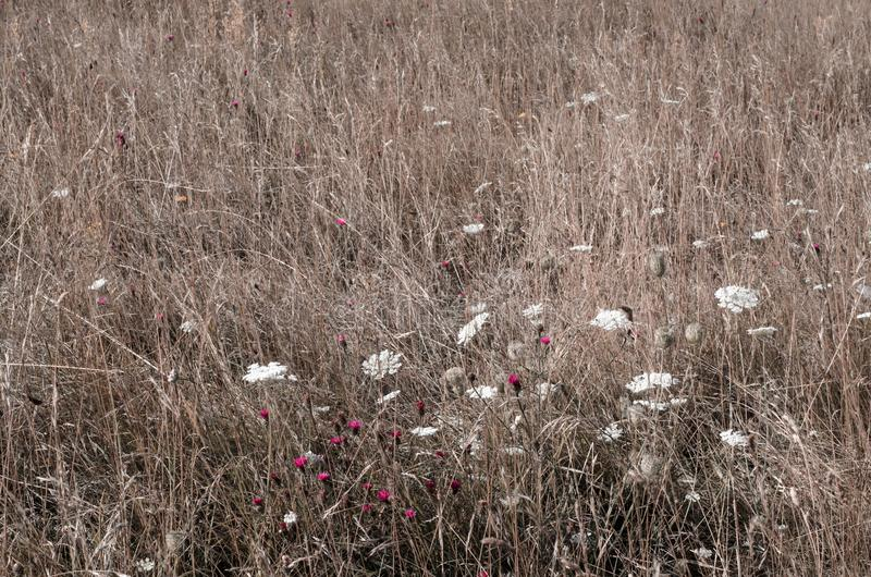 Äng för löst gräs med blommor fotografering för bildbyråer