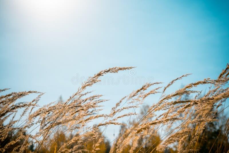 Äng med högt gräs under blåsväder royaltyfri bild