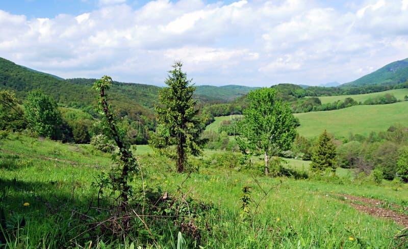 Äng med isolerade träd och buskar i Strazovske vrchy berg arkivfoton