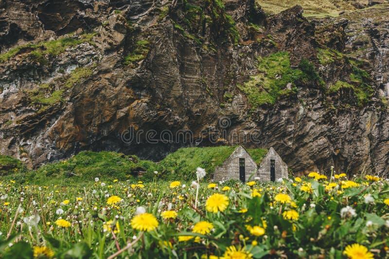 äng med maskrosor och kamomillar nära bosatta hus med gräs- tak under berget royaltyfria foton