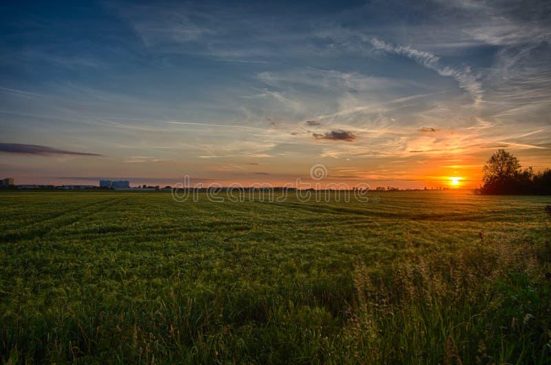 Äng med solnedgång i bakgrunden arkivfoto
