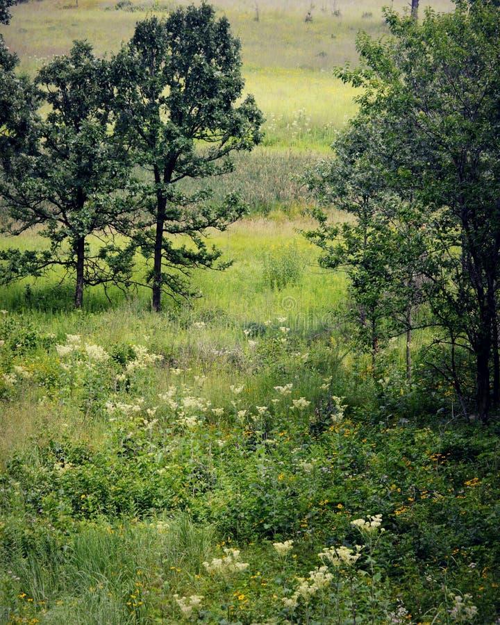 Äng med träd och blommor arkivbilder