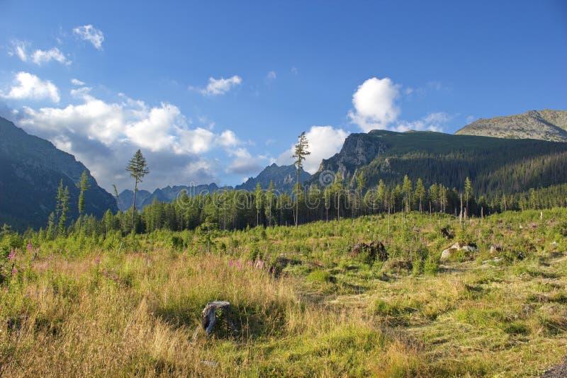 Äng och höga Tatras berg arkivfoto