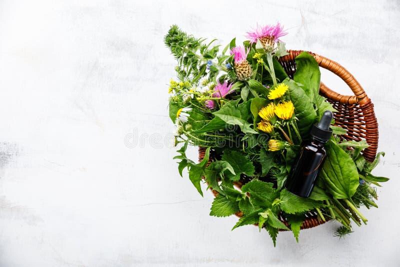 Äng och medicinsk växt- tinktur för örter och royaltyfria foton