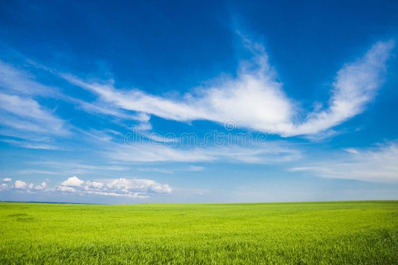 Äng på bakgrunden av blå himmel arkivbild