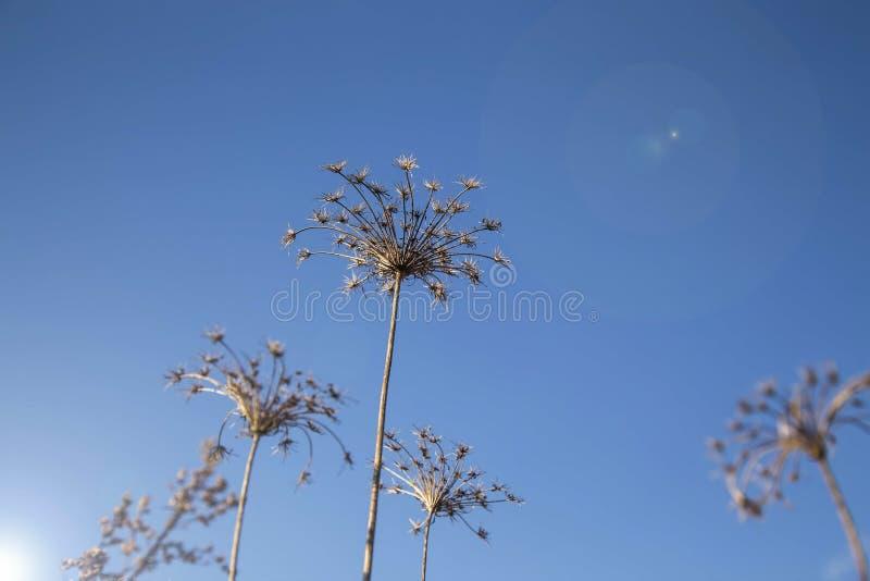 Äng torkade blommor royaltyfri foto