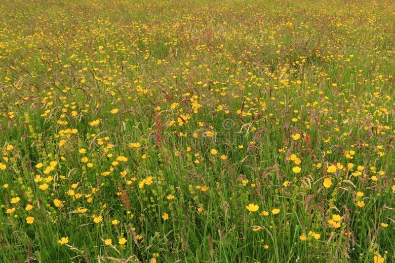 Ängar Kettlewell för lös blomma för sommar arkivbilder