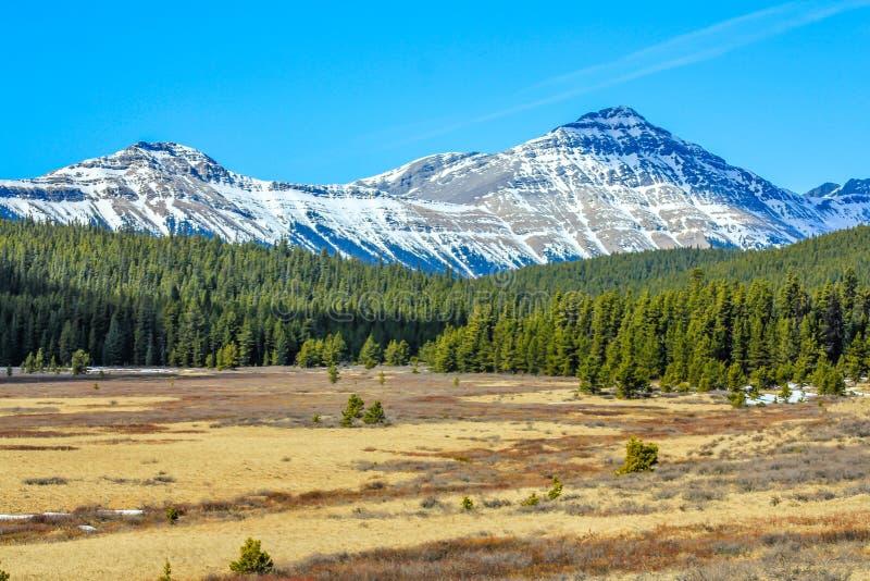 Ängar nedanför Alberta Foothills arkivfoton