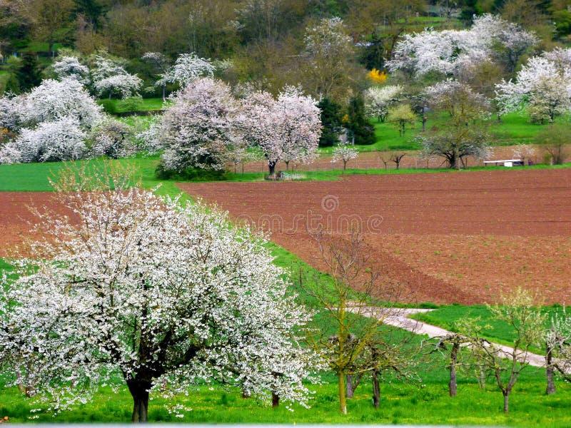 Ängar och fält med blomningfruktträd arkivbilder
