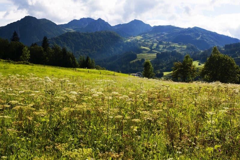 Ängarna och bergen nära Wiesensee Österrike royaltyfri foto