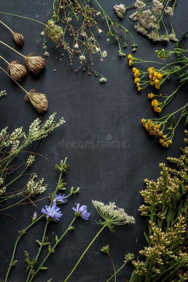 Ängen för sen sommar blommar och växter på den svarta svart tavlan royaltyfria foton