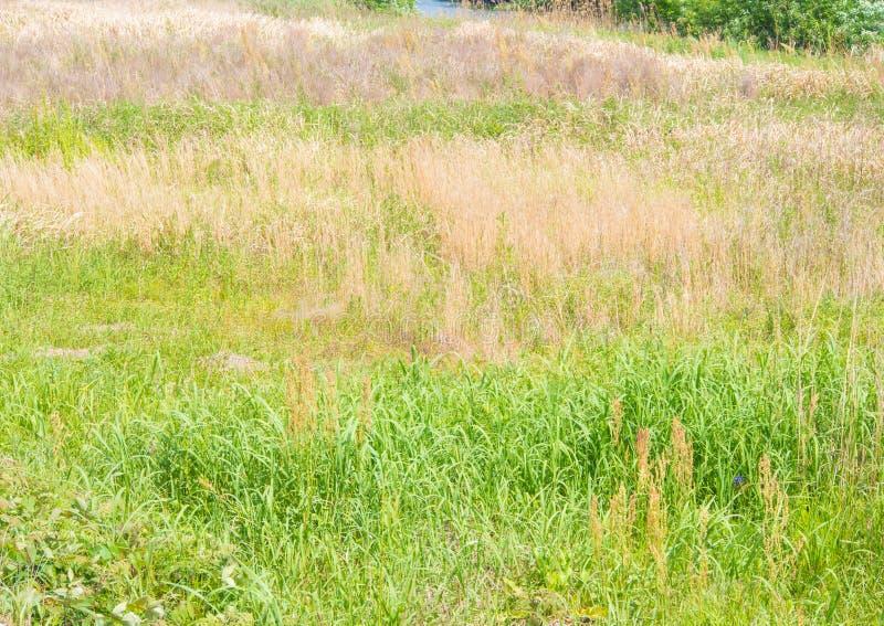 Änggräs och hö är blandade arkivbild