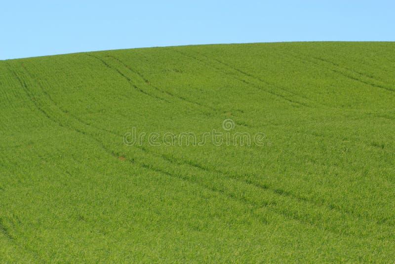 ängsky för blå green arkivfoto