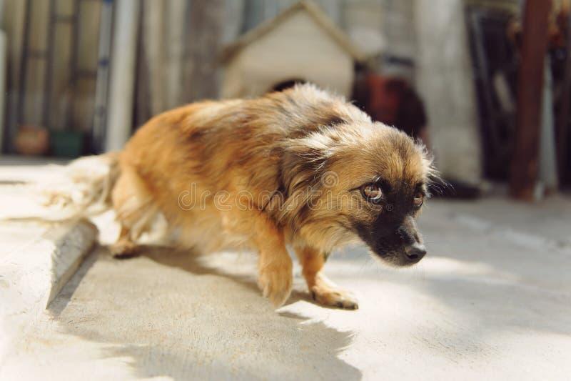 Ängstlicher Hund lizenzfreie stockbilder