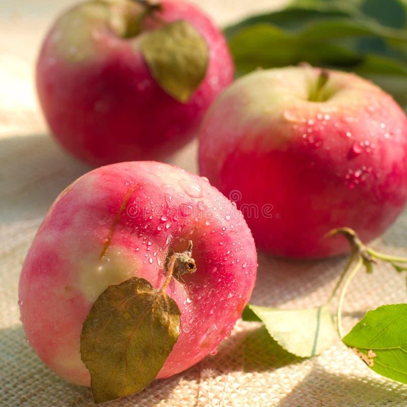 Download Äpfel stockfoto. Bild von frucht, grün, nahrung, saftig - 26352780