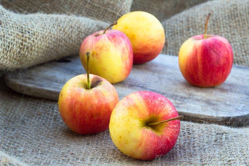 Äpfel stockfotografie