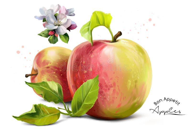 Äpfel, blüht und spritzt stock abbildung