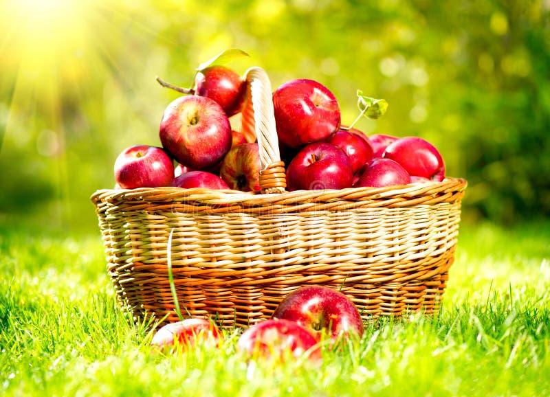 Äpfel in einem Korb lizenzfreie stockbilder