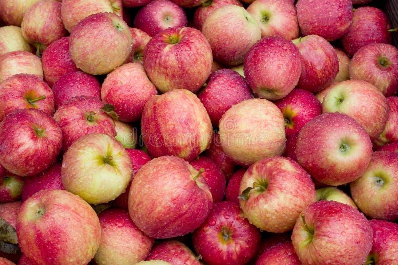 Äpfel nach der Ernte lizenzfreie stockfotografie