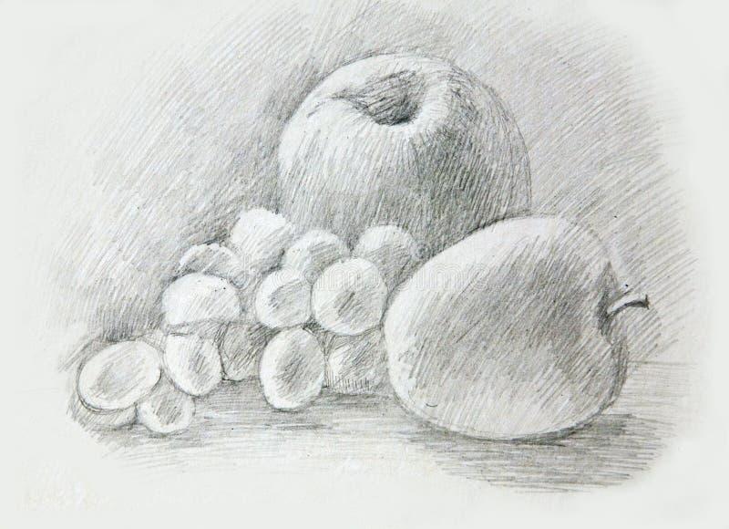 Äpfel, Trauben, peaÑ  h Zeichnung des Baums auf einem weißen Hintergrund lizenzfreie stockfotografie