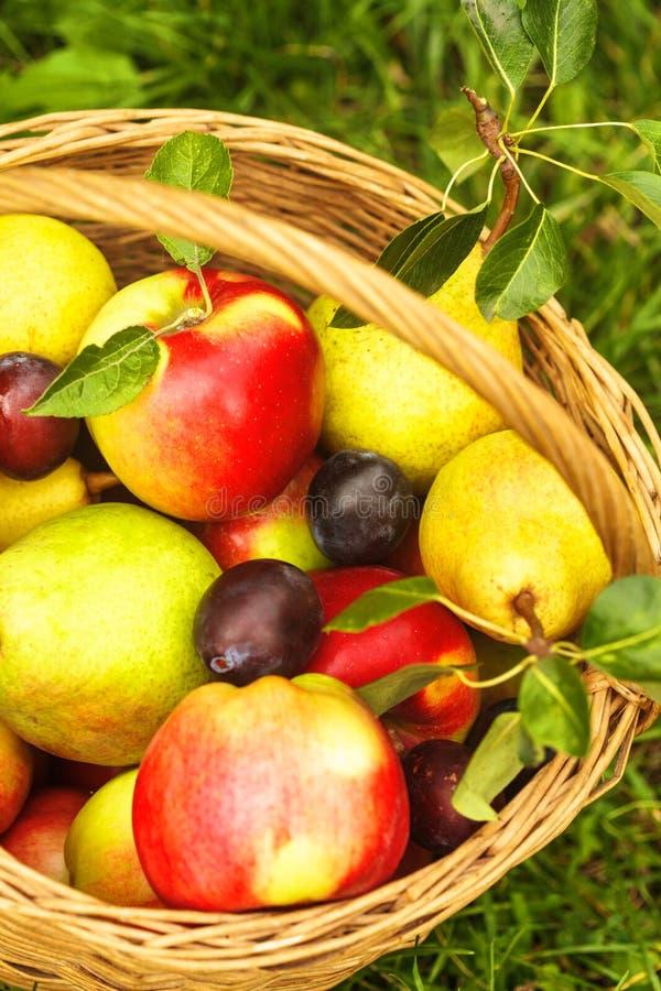 Äpfel und Birnen auf Gras stockbilder
