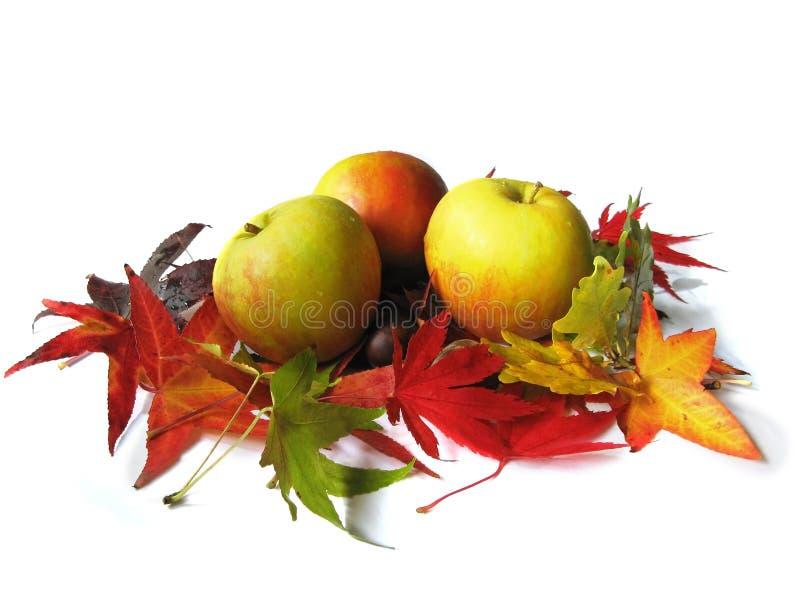 Äpfel und Herbstblätter stockfotografie