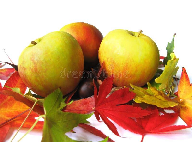 Äpfel und Herbstblätter lizenzfreie stockfotos
