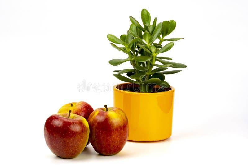 Äpfel und saftiges stockbilder