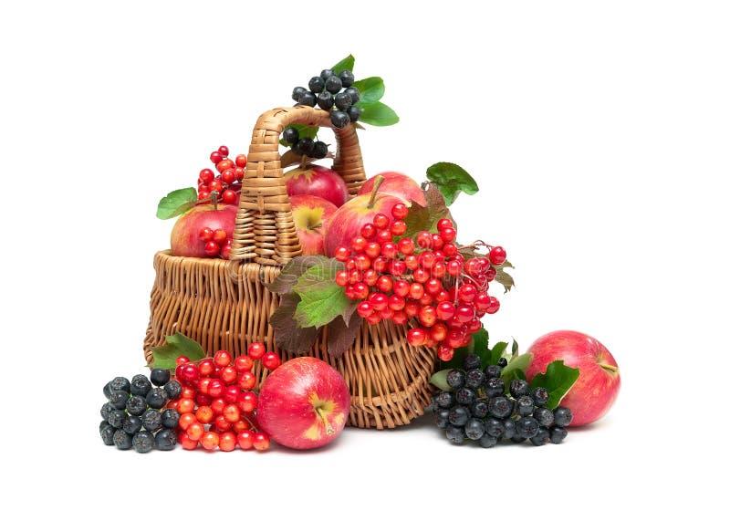 Äpfel, Viburnumbeeren und Chokeberry in einem Korb auf einem weißen b lizenzfreies stockfoto