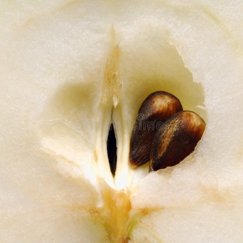 Download äpple fotografering för bildbyråer. Bild av ovule, hälsa - 518613