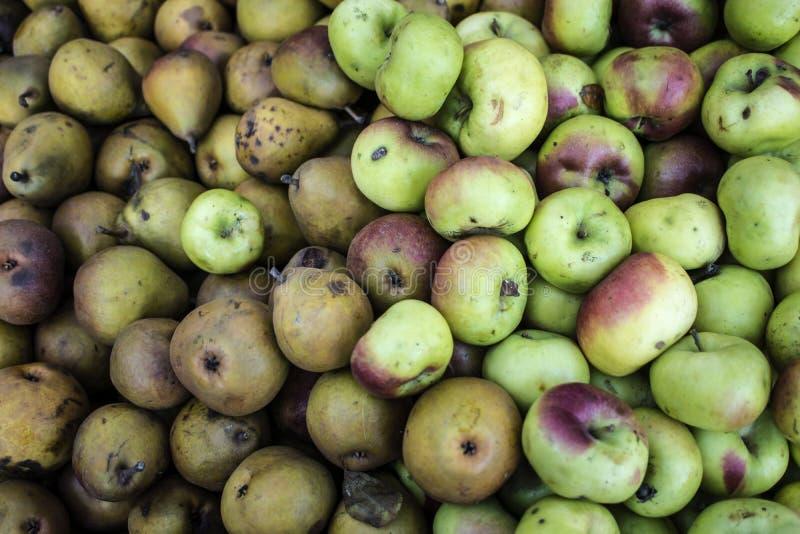 Äpple för rosa dam med seckelpäron royaltyfri bild