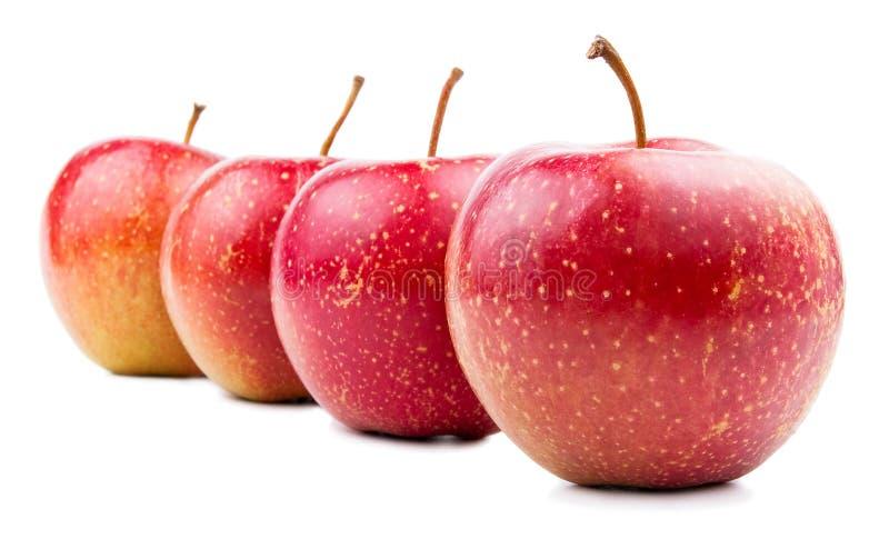 äpple fyra isolerade red fotografering för bildbyråer