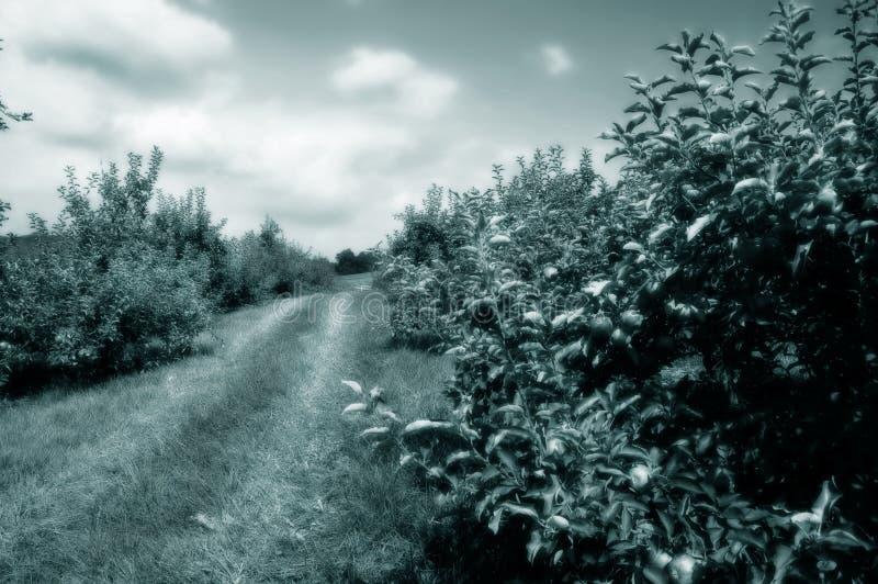 Download äpple - Tonad Grön Fruktträdgård Fotografering för Bildbyråer - Bild av kantjustering, näring: 276449