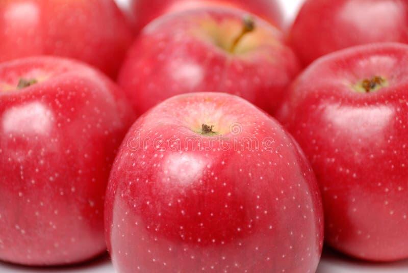 äpplebakgrundsred royaltyfri foto