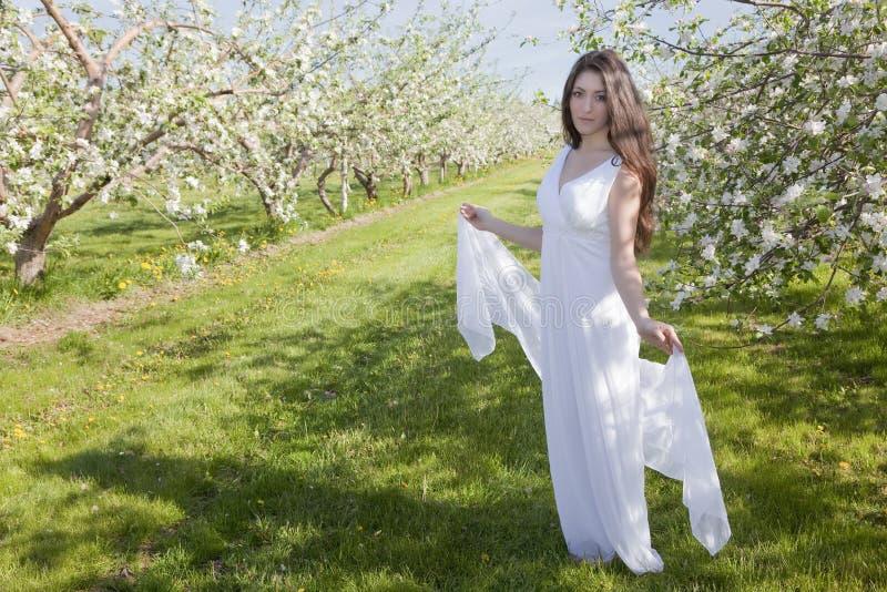 äppleblomningkvinna arkivbild
