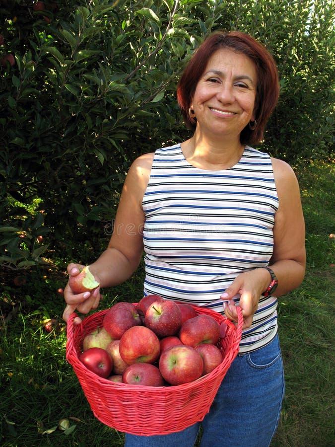 äpplefallskörd royaltyfri foto