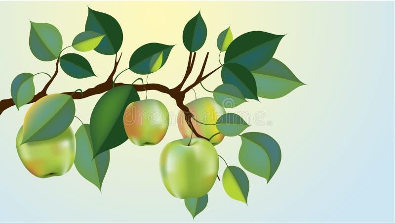 äpplefilialgreen stock illustrationer
