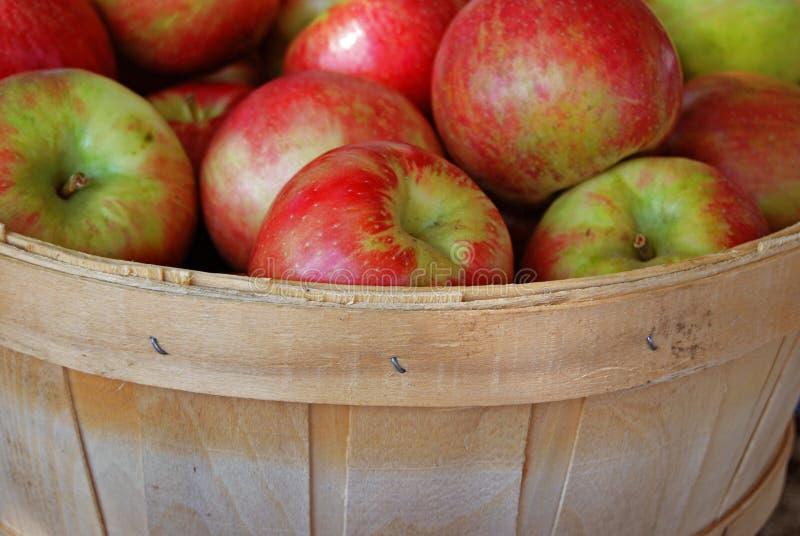 äpplehöst arkivbilder
