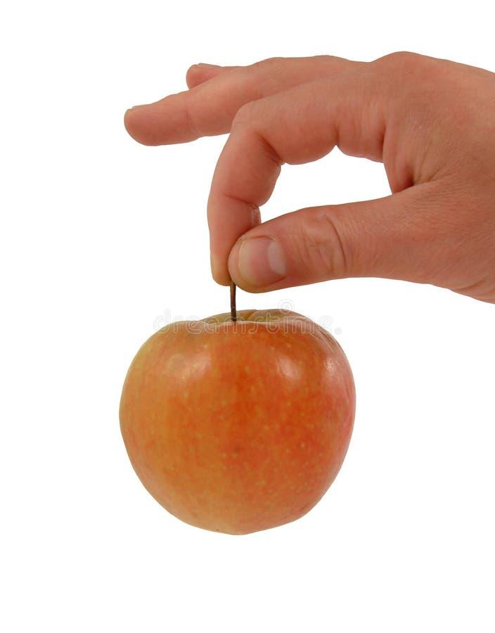 äpplehandred arkivbild
