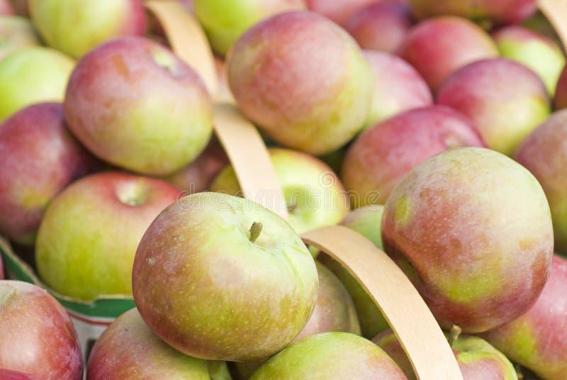 äpplekorgar macintosh royaltyfria bilder