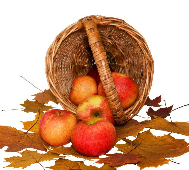 äpplekorgen föll arkivbild