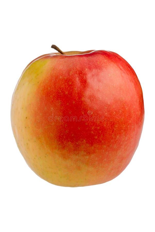 äppleladypink royaltyfria foton