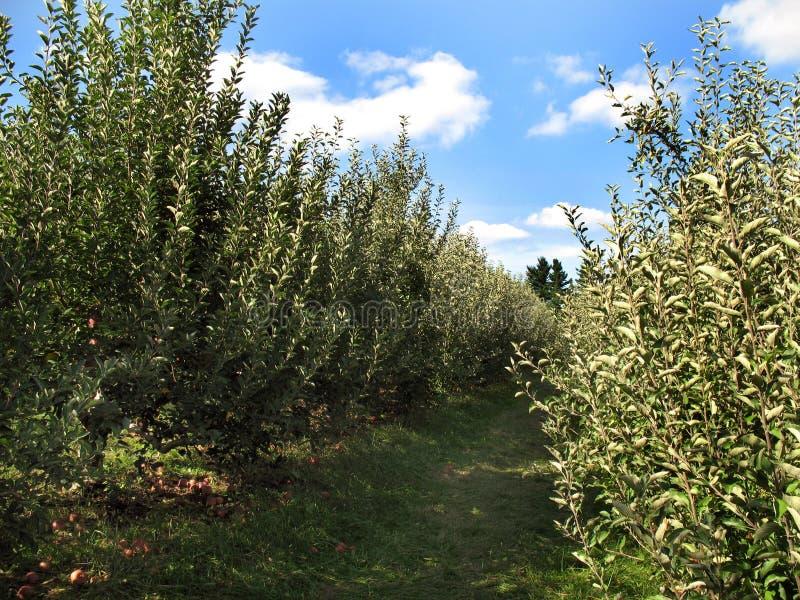 äpplelandsmaryland fruktträdgård royaltyfri bild