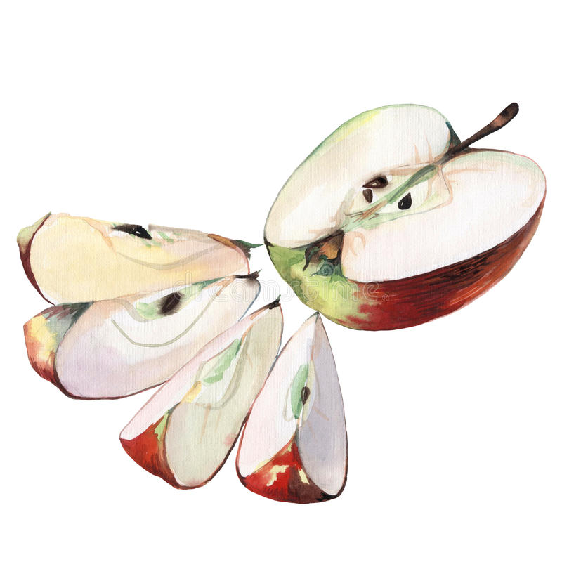 äpplelivstid fortfarande royaltyfri illustrationer