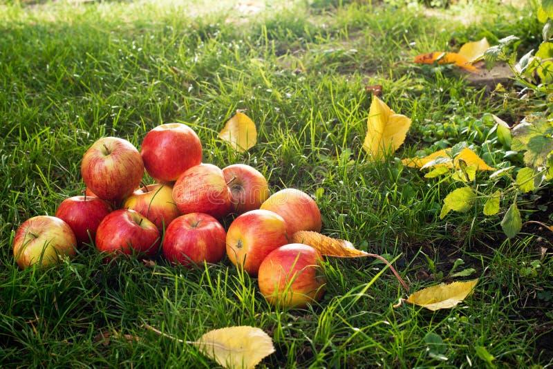 äpplen överhopar red arkivfoton
