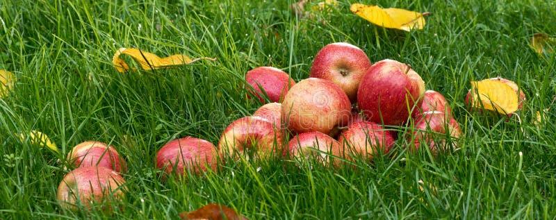 äpplen överhopar red fotografering för bildbyråer