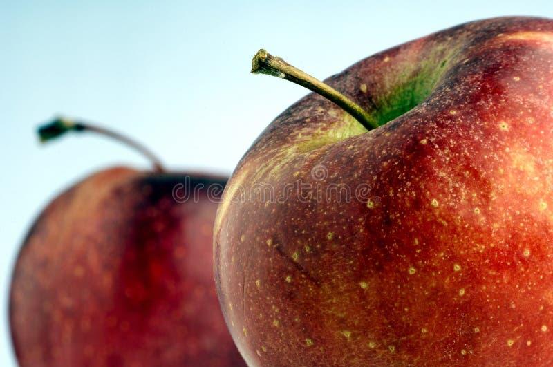 äpplen royaltyfri bild