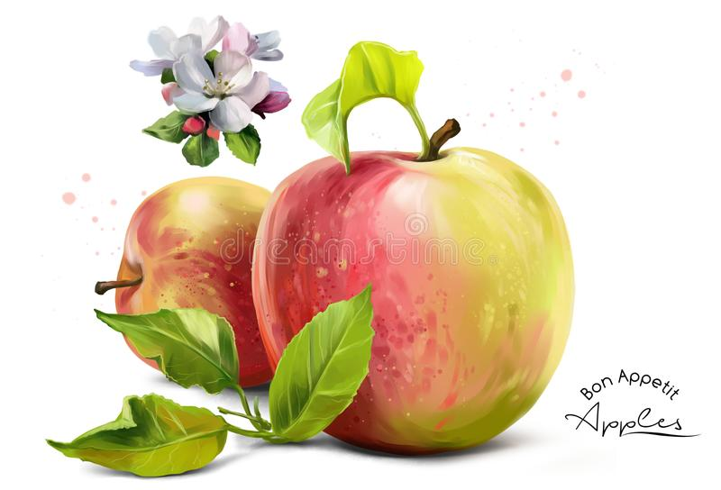 Äpplen, blommor och färgstänk stock illustrationer